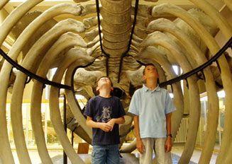 365 Journées découvertes - Attractions Touristiques et Musées de Belgique - Aquarium-Muséum de Liège