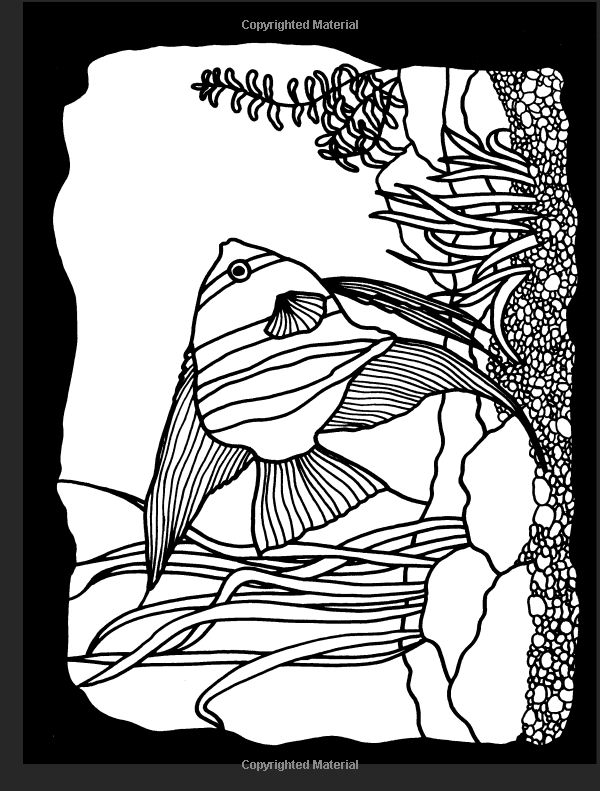 Amazon Aquarium Fish Stained Glass Coloring Book Dover Nature