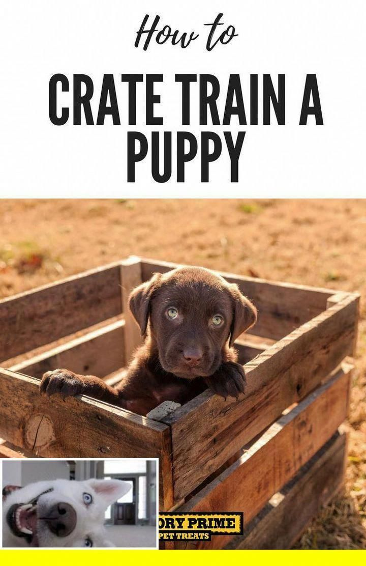 1 Potty Training Dogs Chicago And Leash Training A Dog In The House Check Out The Picture For Many Puppy Training Dog Potty Training Training Your Puppy