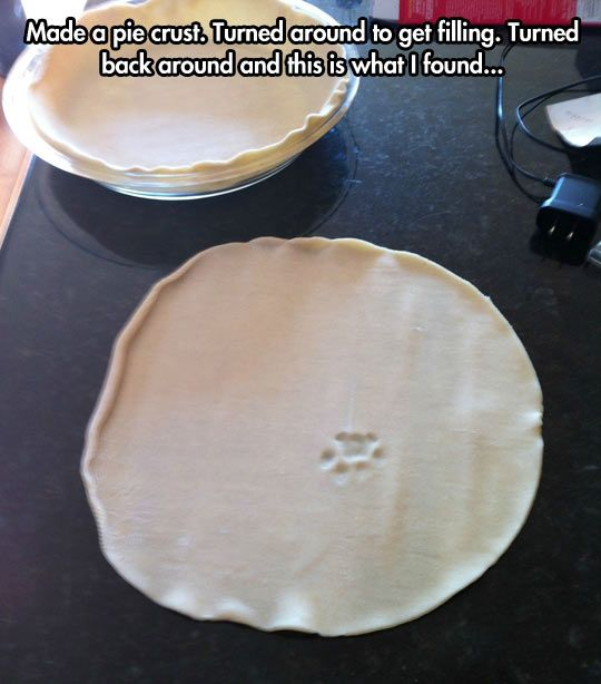 The mysterious paw print...