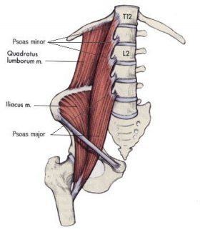 "Koch believes that by cultivating a healthy psoas, we can rekindle our body's vital energies by learning to reconnect with the life force of the universe. Within the Taoist tradition the psoas is spoken of as the seat or muscle of the soul, and surrounds the lower ""Dan tien"" a major energy center of body.  A flexible and strong psoas grounds us and allows subtle energies to flow through the bones, muscles and joints."