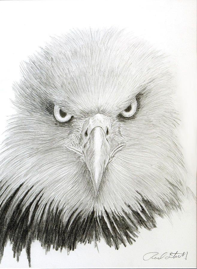 206 best Eagle sketches images on Pinterest | Eagle drawing, Bald ...