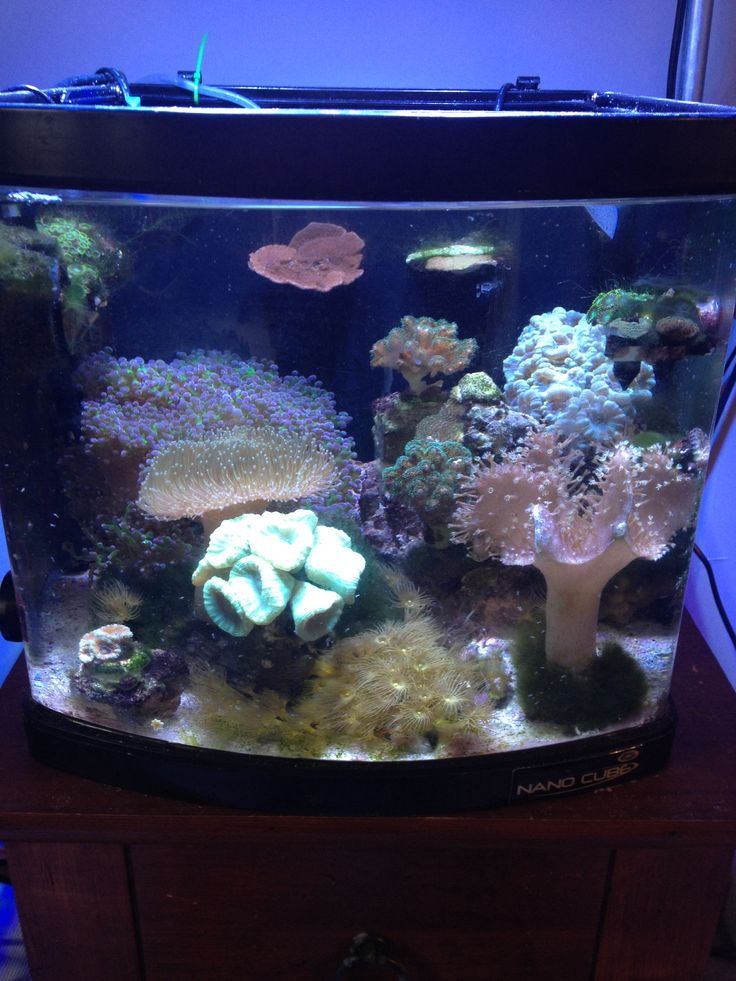 39 best images about saltwater tanks fish on pinterest for Reef tank fish