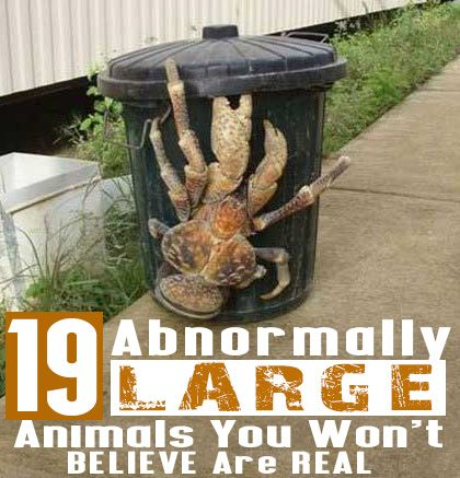 19 Abnormally Large Animals You Won't Believe Are Real