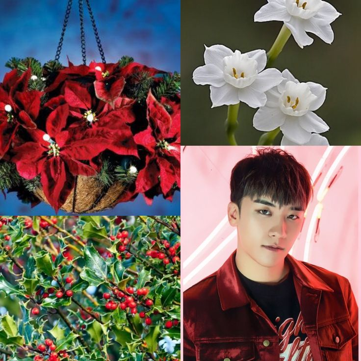 BirthFlower&KPOP // Poinsettia, Holly & Narcissus // Seungri of BigBang