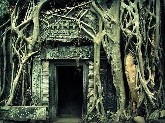 Ta Phrom Temple in Siem Reap, Cambodia