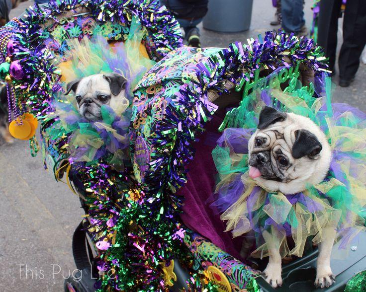 Mardi Gras Pugs