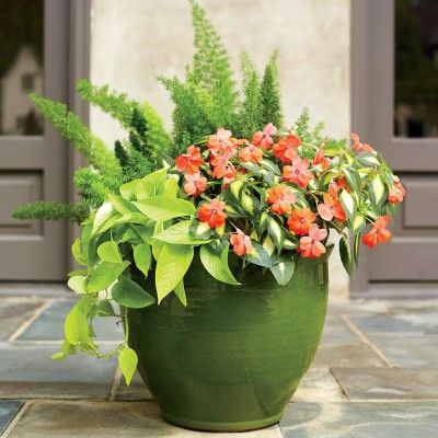 121 container gardening ideas container gardening for Low maintenance potted flowers outdoor