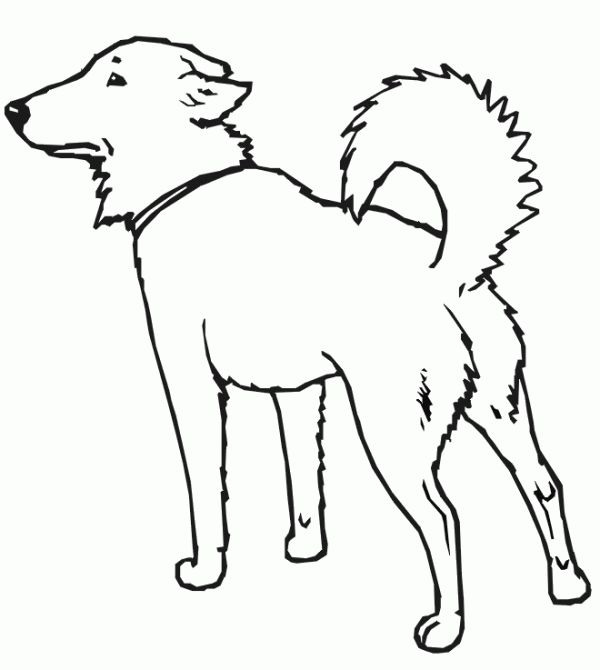assistance dogs coloring pages - photo#26