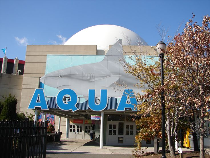 Plan Your Visit to the Adventure Aquarium in Camden New Jersey Adventure Aquarium - Camden, NJ