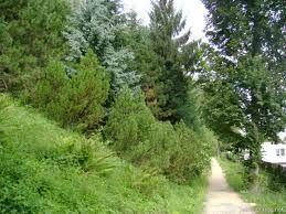 Esto es el bosque-parque Belveder. Es encima de mi calle.