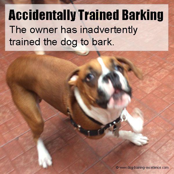 accidentally trained barking, stop dog barking http://dogcoachinggenius.com/category/dog-training-obedience/