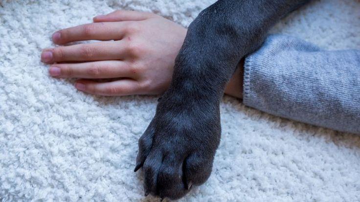 Día Nacional del Perro: ¿por qué siempre será el mejor amigo del hombre? – AB Magazine