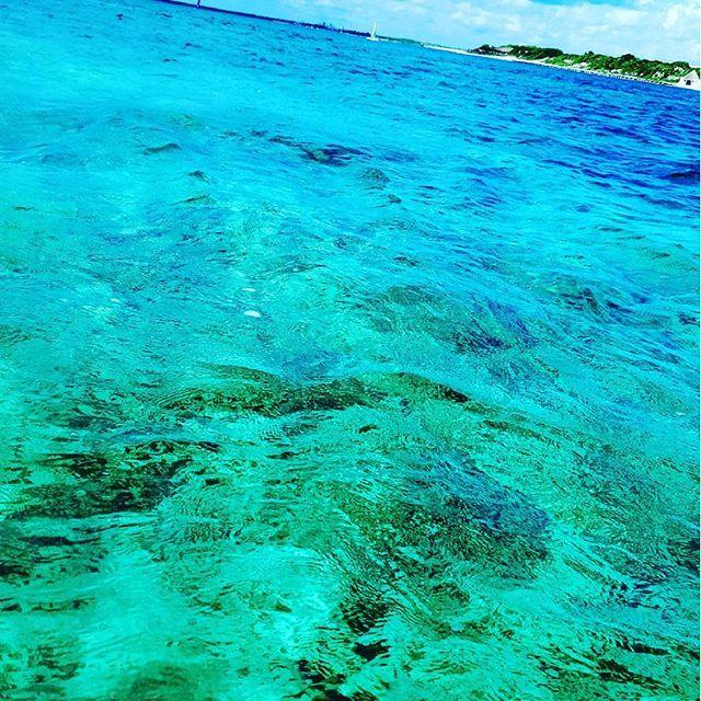 【_reo_1130】さんのInstagramをピンしています。 《#メキシコ#カンクン#カリブ海#透明度抜群#シュノーケリング#ボート#ボートシュノーケリング#カリビアンブルー#エメラルド#海#お魚いっぱい#ダイビング#旅行#海外旅行#リゾート#日焼け#cancun#sea#travel#resort #vacation#sightseeing #boat#fish#amazing#caribbeansea #carib#beautiful》
