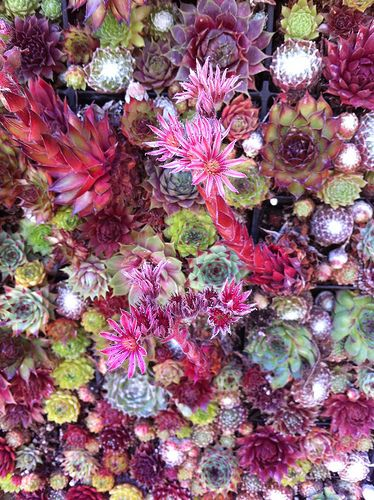 succulent wall                         #KATHY--LOVES