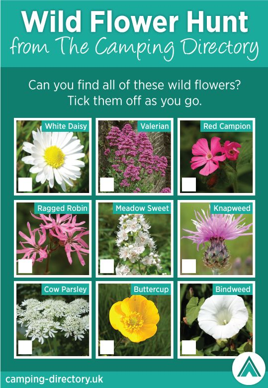 Take the #kids on a #wildflower hunt, print off our list & let us know how many you find!