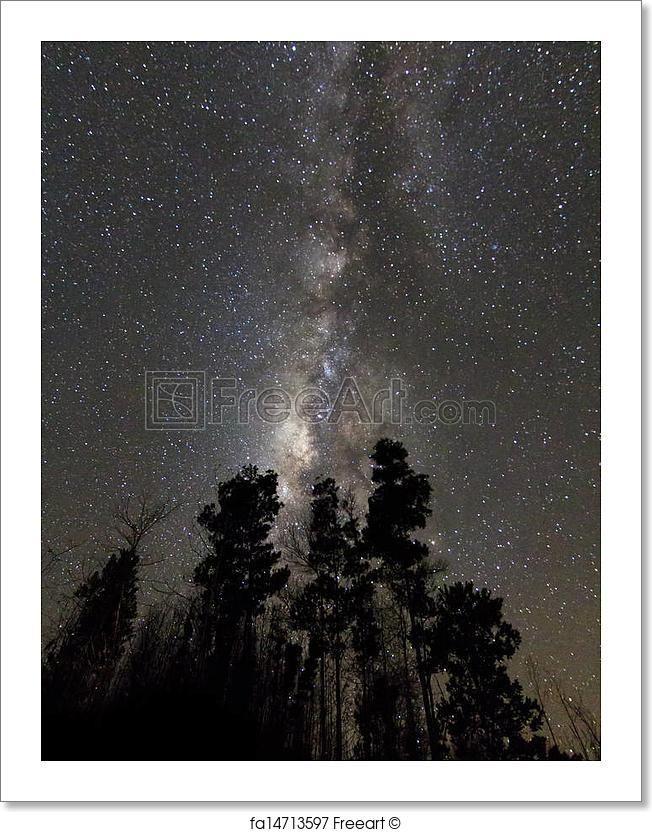 """Milky way above the trees at borneo, sabah, malaysia"" - Art Print from FreeArt.com"
