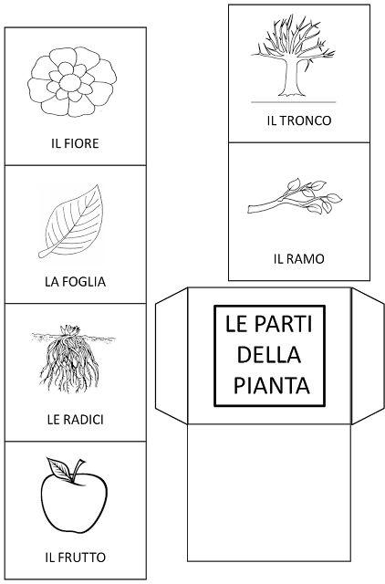 MAESTRALUCIA: Le parti della pianta per Lapbook