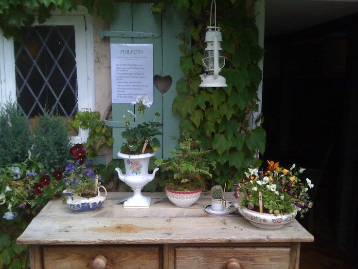 Philpots - fabulous vintage china bedded with beautiful seasonal plants.
