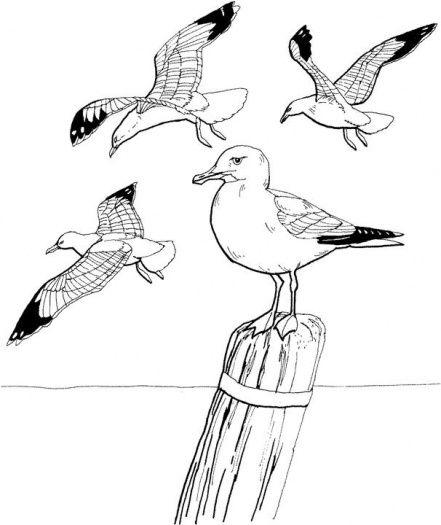 Kleurplaat thema meeuwen / Gull coloring