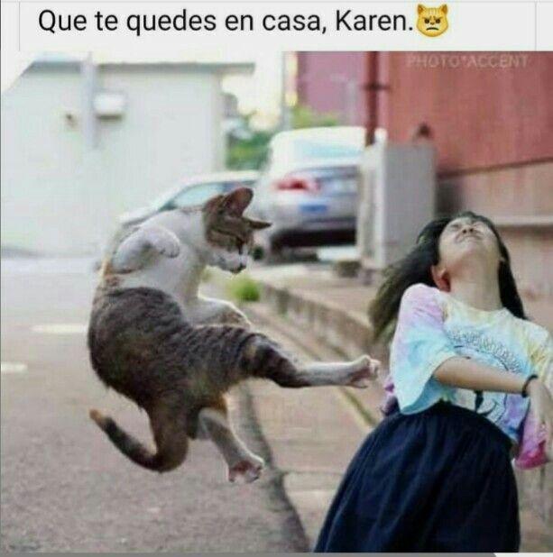Pin En Memes De Gatitos