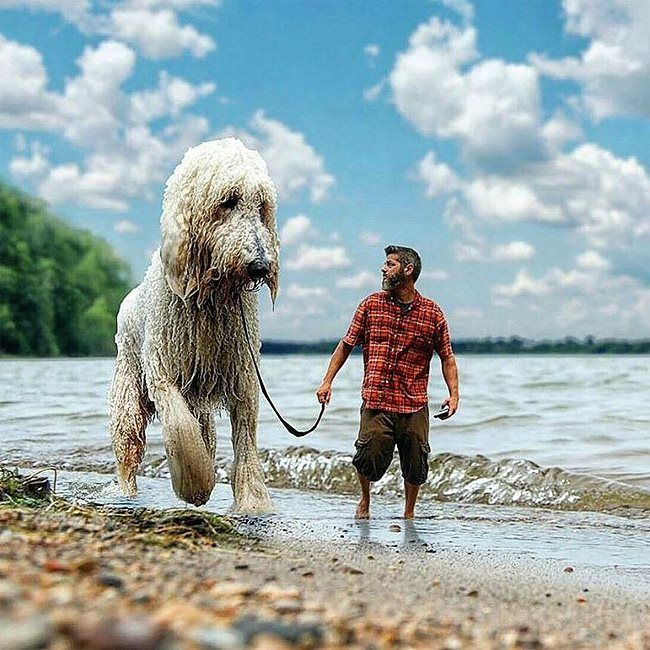 Best Funny Photos Images On Pinterest - Guy uses photoshop to turn his miniature dog into a giant
