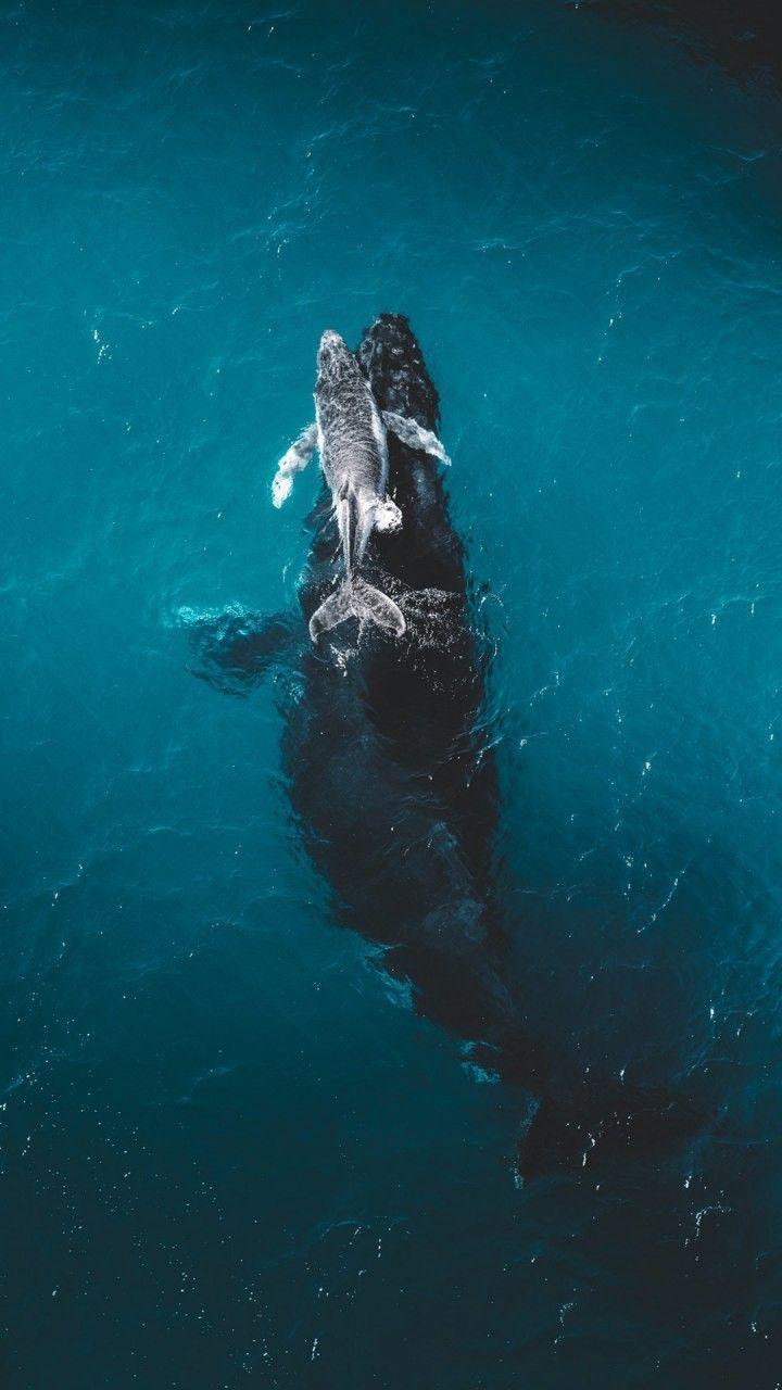 Pin By Shoreline Summit Adventures On Animals Pictures Ocean Animals Animal Wallpaper Sea Animals