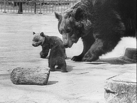 The sweetest small bear. The first walk [video] Repozytorium Cyfrowe Filmoteki Narodowej #animals #sweet