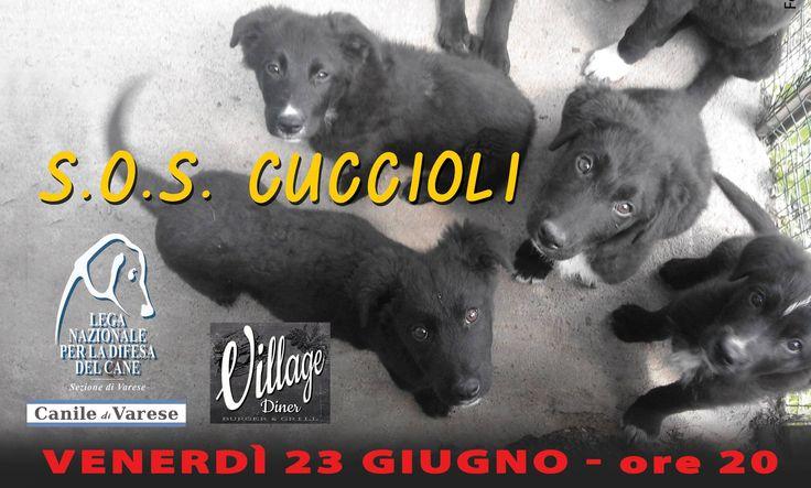 23/6 cena #benefit #veg per i #cuccioli ospiti del #canile di #Varese