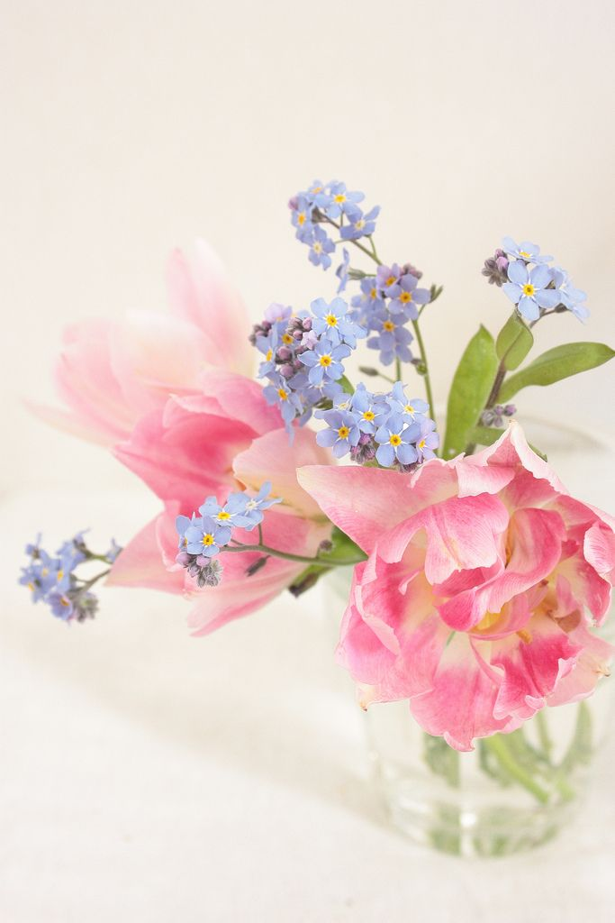 Tulips & forget-me-nots | fresh from my garden