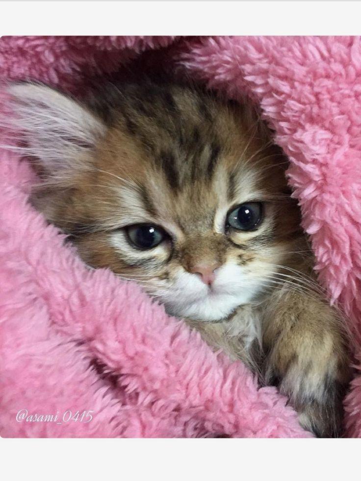 Pinterest Kittens cutest, Cute cats, Cute baby animals