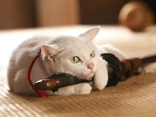 Twitter / nekozamuraiinfo: 【劇場版「猫侍」よくある質問まとめ②】 Q.ドラマ版が終わり猫侍ロスに… A.劇場版が待っておる。また逢えるではないか。それまで応援よろしく頼むぞ #猫侍