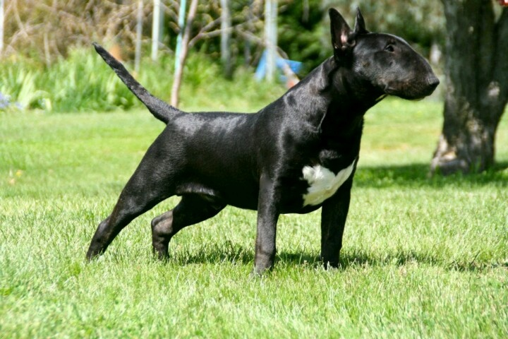 black bullies are so special.