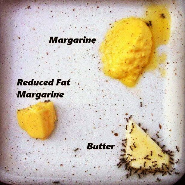 #margarina vs. #mantequilla serán hormigas pero no tontas! Hazle caso a la naturaleza.      #nutrition #protein #cleaneating #weightloss #iifym #healthyfood #healthyeating #gains #wellness #plantbased #fitfood #muscle #abs #healthylifestyle #instafit #glutenfree #exercise #physique #shredded #healthychoices #healthyliving