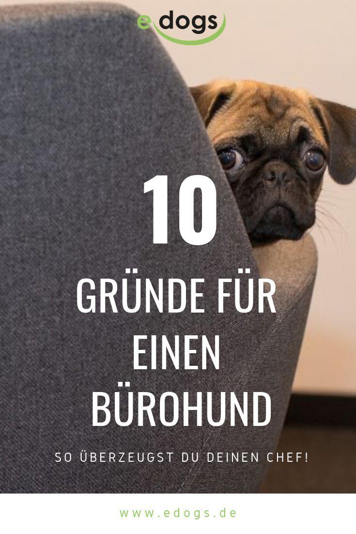 10 Grunde Warum Jedes Buro Einen Hund Braucht Hund Im Buro Hunde Tierheim Hunde