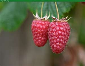"""""""How to grow raspberries"""" by a woman in the Seattle area.  Great tips!!!"""