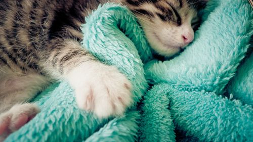 turquoise, cats, & snuggling; a few of my favorite things