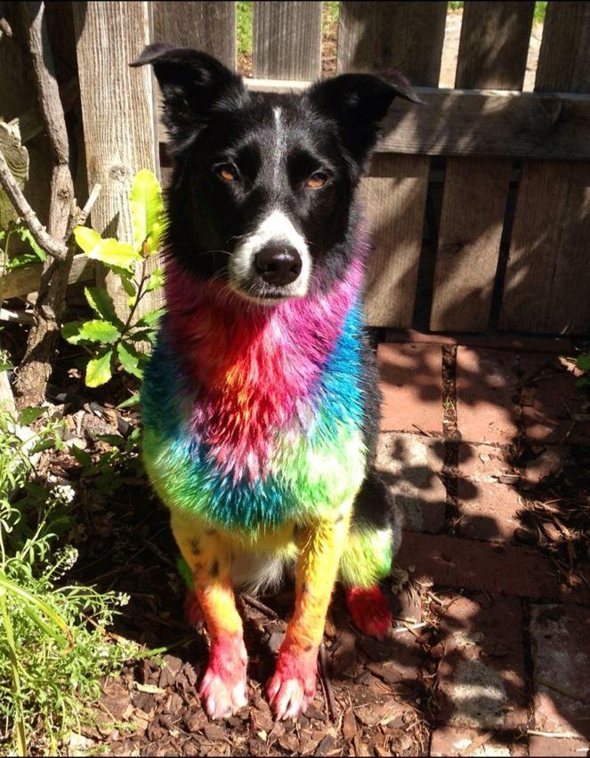 76 best Creative Grooming images on Pinterest   Creative grooming ...
