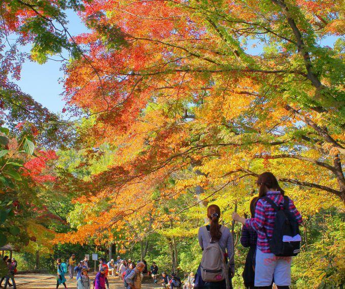 Mt.takao in autumn. 高尾山で紅葉を巡り、名物とろろ蕎麦に舌鼓!登山の後は温泉でリラックス!