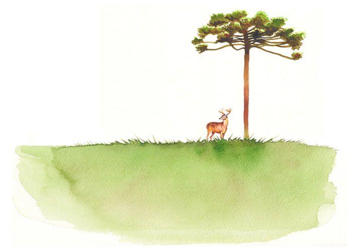 Ilustración de acuarela, Huemul y Araucaria
