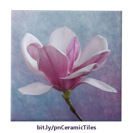 This pretty ceramic tile features a beautiful pink and white Chinese magnolia flower set against a textured blue and pink background. It would be a lovely accent for a girl's bath. https://www.zazzle.com/pink_chinese_magnolia_blossom_tile-227183872584879802?rf=238083504576446517&tc=20170302_pint_HD #homedecor #floral #photography #nature #StudioDalio #Zazzle