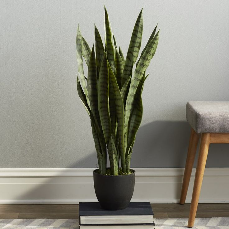 Beachcrest Home Sycamore Faux Sansevieria Floor Plant in Pot & Reviews | Wayfair