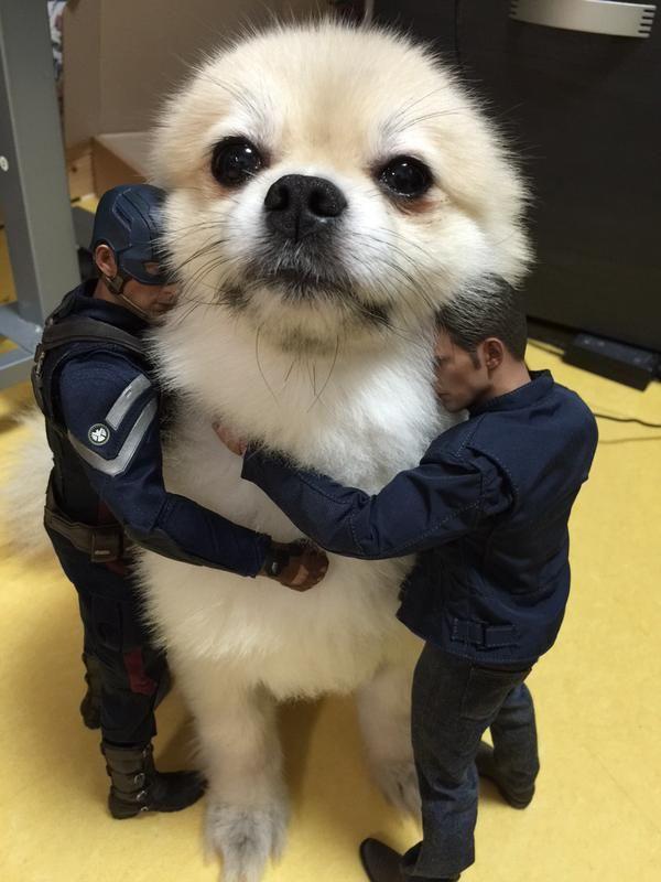 おっさんフィギュアに囲まれ解せぬ表情の犬