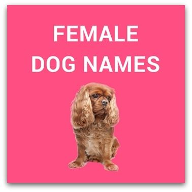 We have shortlisted a huge list of female dog names, brainstormed, handpicked and curated by us. However, it is important that your dog likes the name.