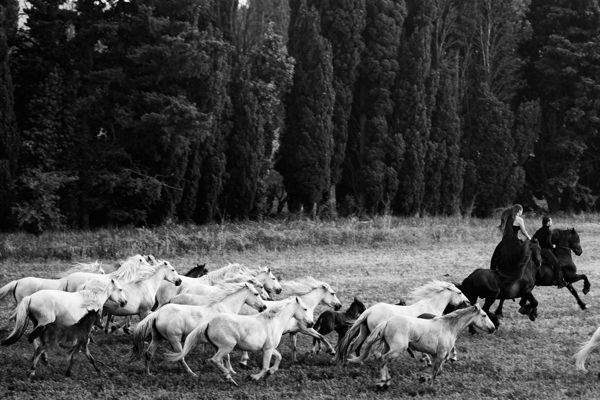 TRANSHUMANCE by Francesca Todde, via Behance