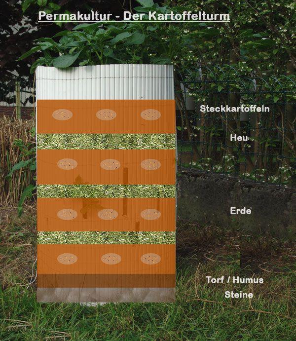 die besten 25 kartoffelturm ideen auf pinterest gr ne kartoffeln kartoffelanbau und garten. Black Bedroom Furniture Sets. Home Design Ideas