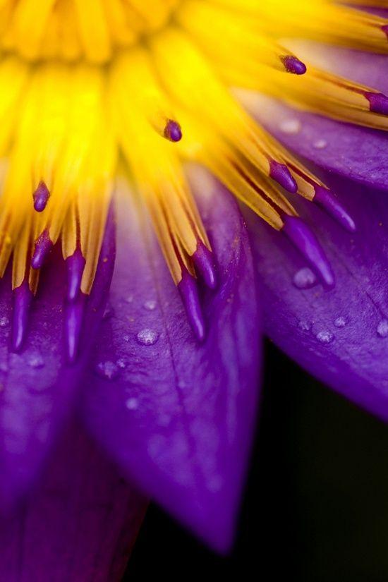 complementair contrast: Violet of blauwpaars tegenover geel. Bij dit contrast liggen de kleuren tegenover elkaar in de kleurencirkel.