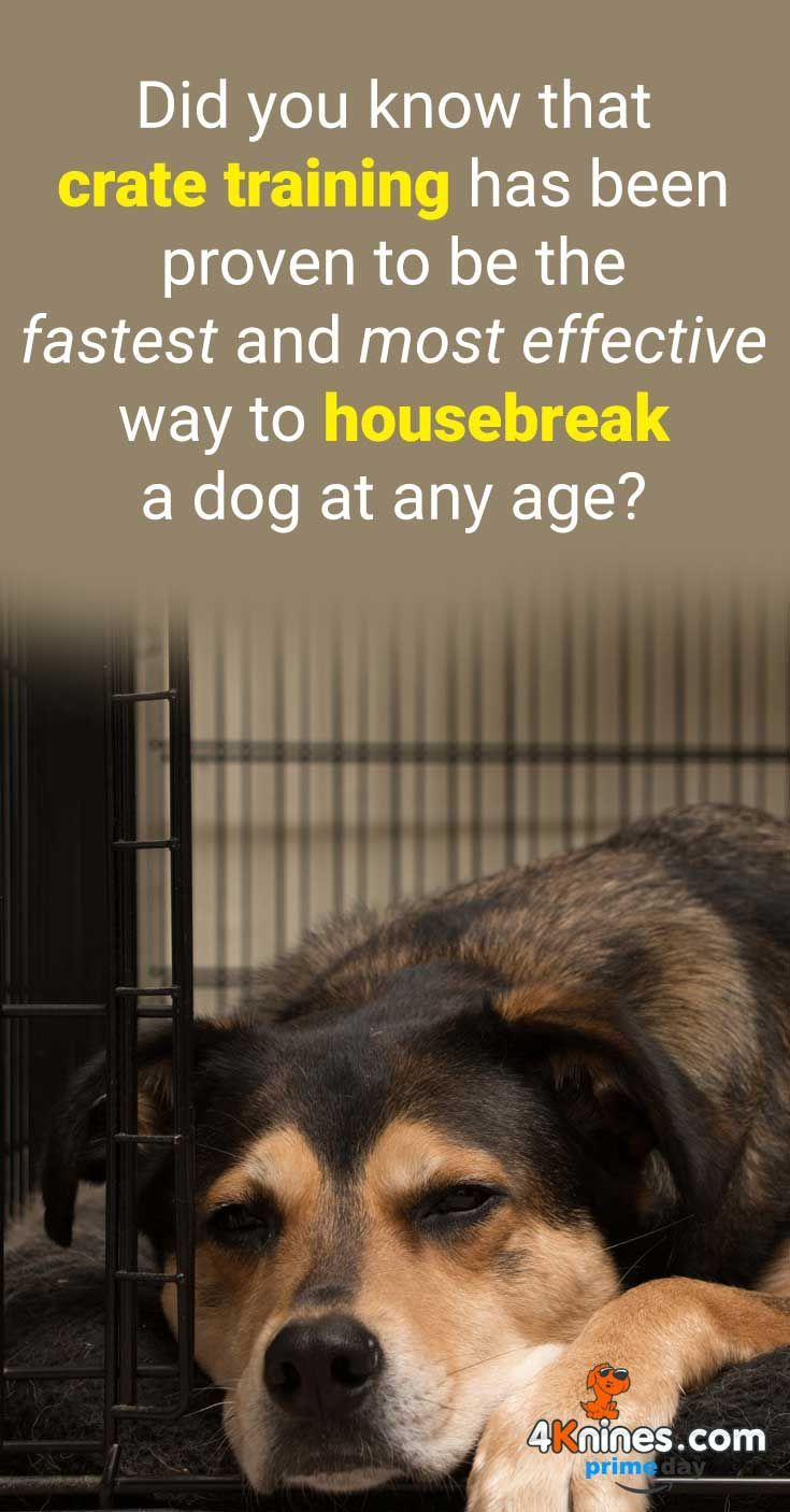 House Training A Puppy Without Crate And Clicker Training Dog To
