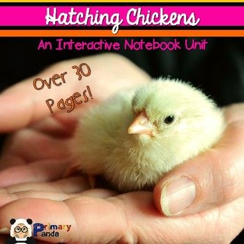 Do you hatch chickens in your classroom or home? This unit is full of fun activities you can use as you hatch!Currently Includes:Hatching Chickens Fact Sheet Close Read (Article, 1st Read Key Facts and Details, 2nd Read Comprehension Check)Parts of an Egg Poster (Two Different Copies)Parts of an Egg Fill-In-The-BlankParts of an Egg Flaps (With Definitions)Chicken Names Flap BookVocabulary Flaps (With Definitions)Hatching Journal (With a variety of pages including observation sheets…