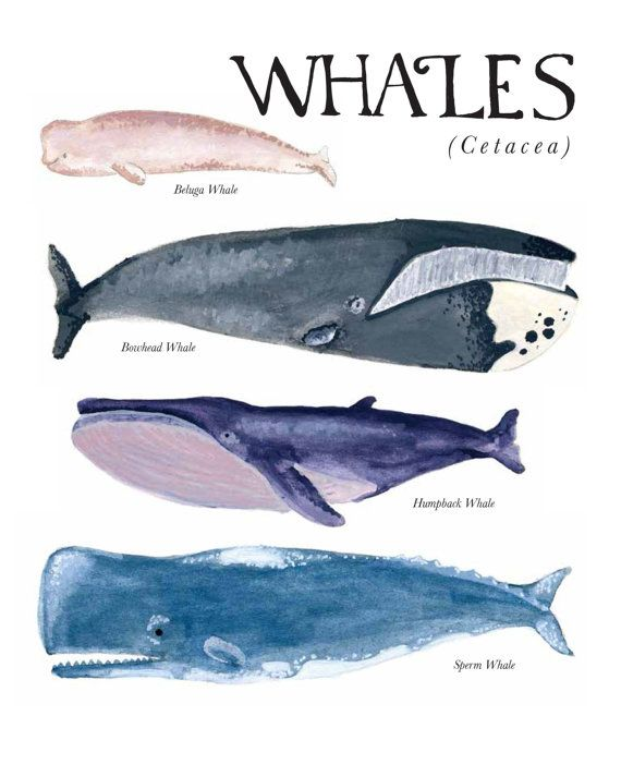 Moby dick allusions